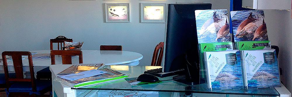 Algarve Dolphin Watching, Algarve souvenirs, Algarve Experiences
