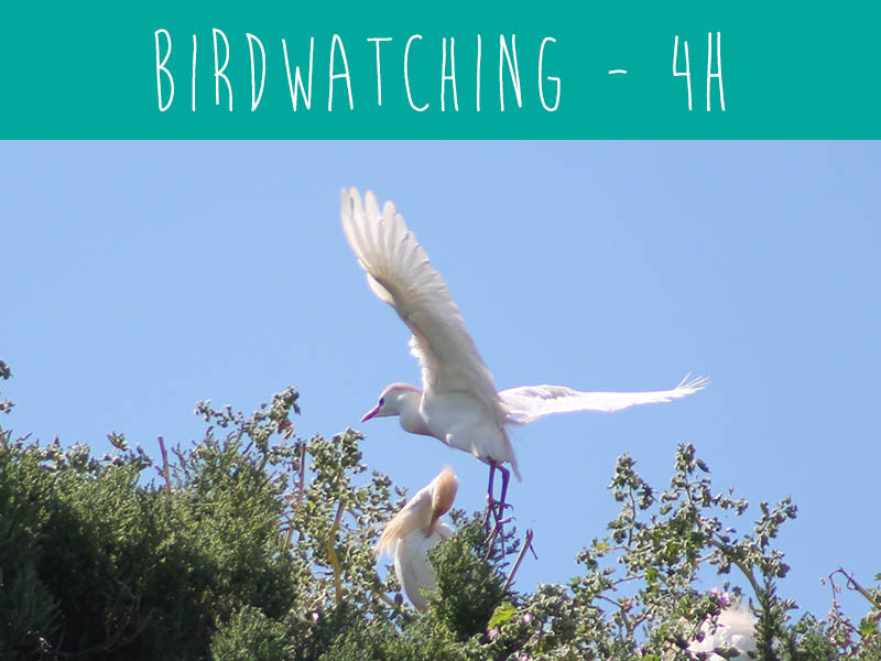 Bird-watching trip with wildwatch Algarve wildlife trips