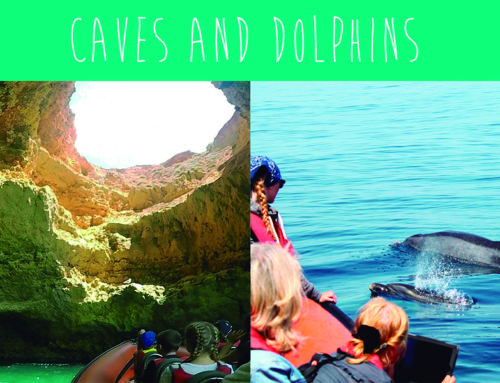 Caves and Dolphins