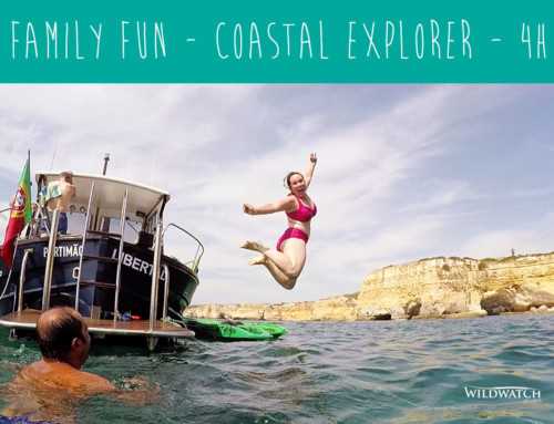 Family Fun – Coastal Explorer – Kayak & Snorkelling
