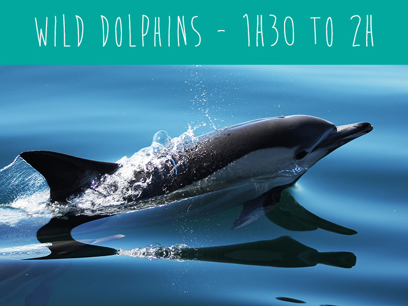 Wildwatch Wild Dolphins the best dolphin watching trip in t