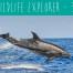 Wildwatch Wildlife Explorer the best dolphin watching trip i
