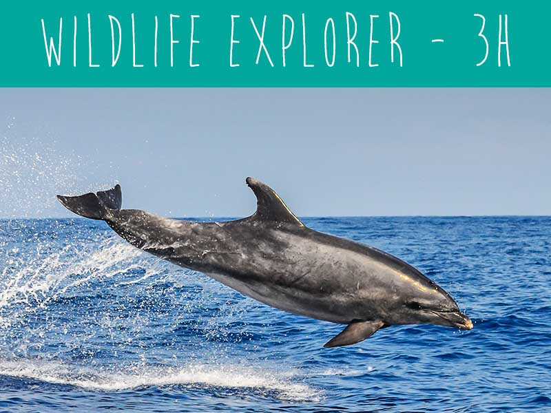 Wildwatch Wildlife Explorer the best dolphin watching trip i