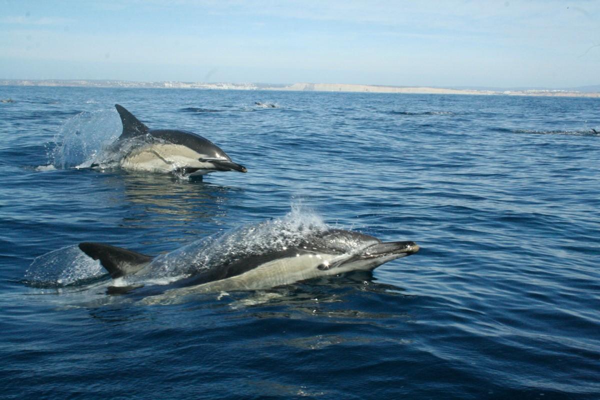 slide_wild_dolphins_3