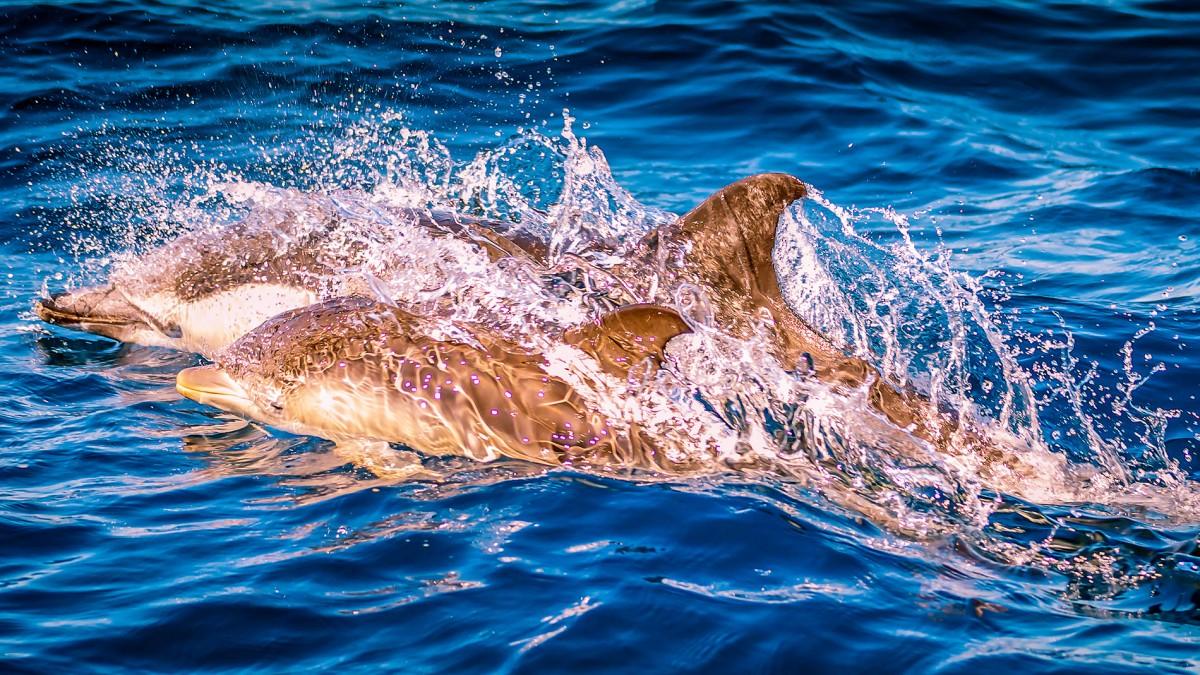 Dolphin Watching in Ferragudo, Praia da Rocha & Carvoeiro