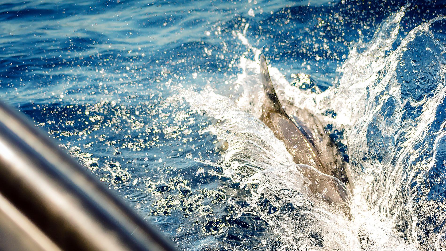 Marine wildlife photography award